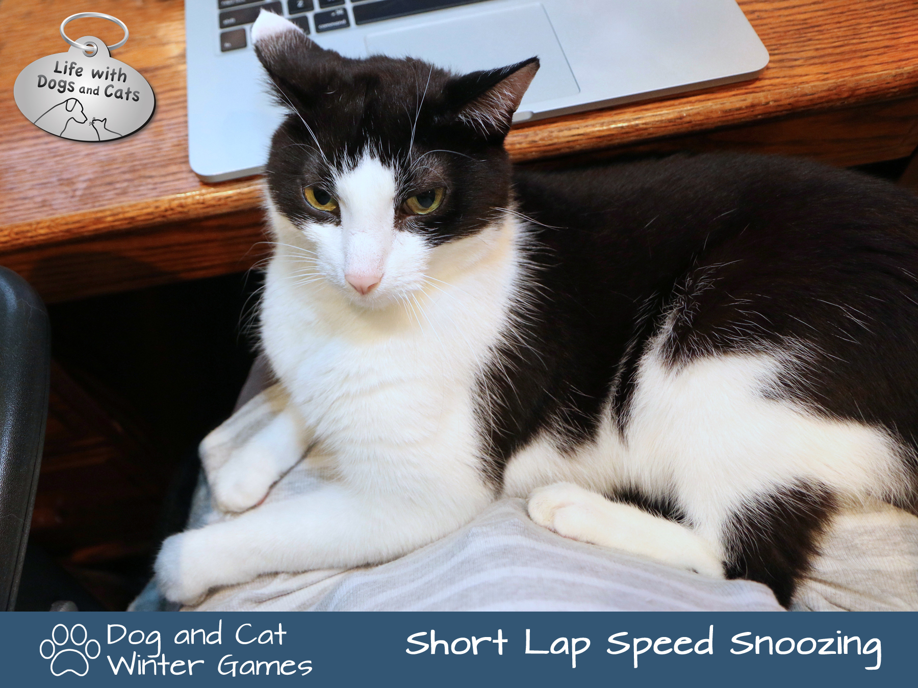Dog and Cat Winter Games: Short Lap Speed Snoozing