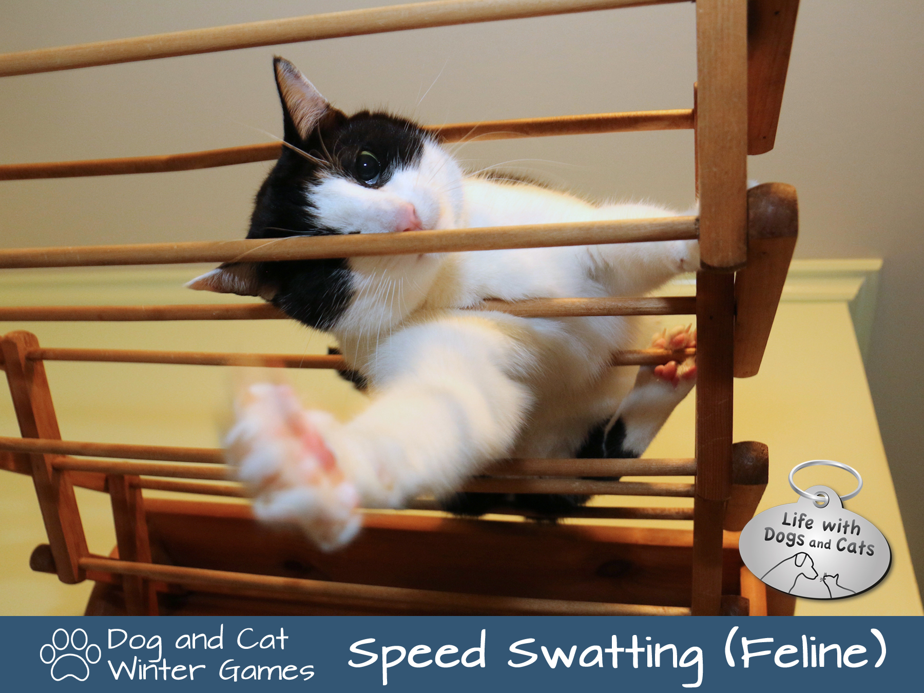 Dog and Cat Winter Games: Speed Swatting