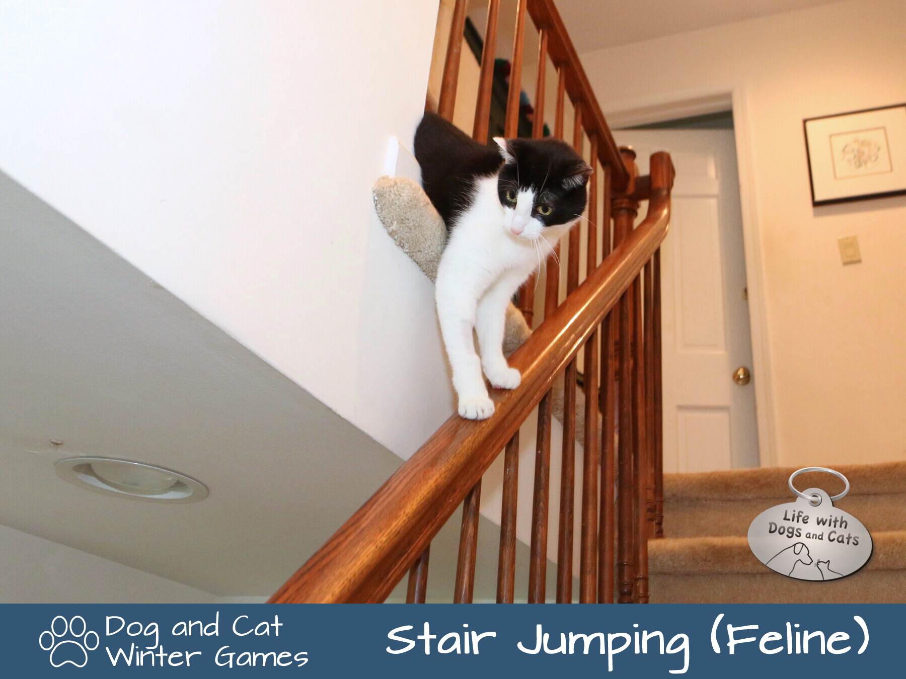 Dog and Cat Winter Games: Stair Jumping