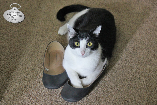 World Cat Day activity: Buy a new pair of shoes