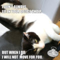 I Don't Always Lie in Your Office Chair But When I Do I Will Not Move For You