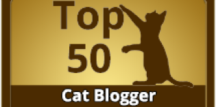 Life with Dogs and Cats Named One of the Top 50 Cat Blogs