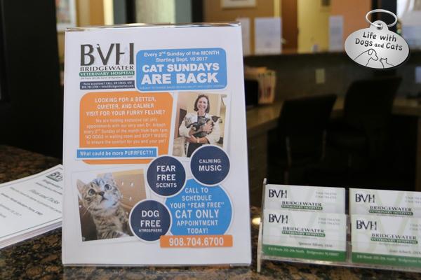 Cat Sundays at Bridgewater Veterinary Hospital