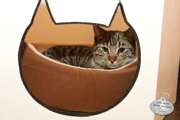 Cat seems comfortable in a bed at Meow Parlour.