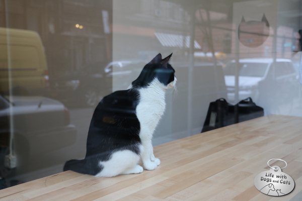 A cat keeps an eye on the New York City street scene from within Meow Parlour.