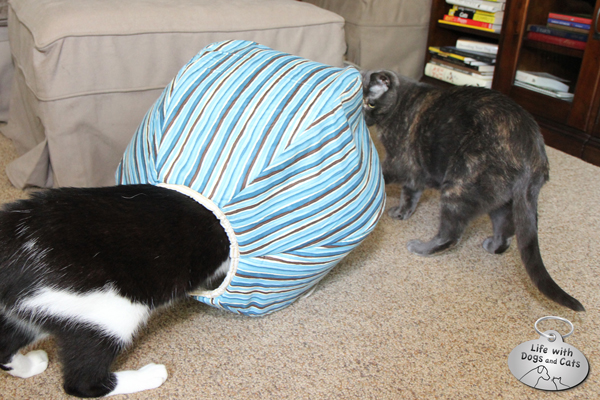 Calvin tests out the Cat Ball while Athena watches
