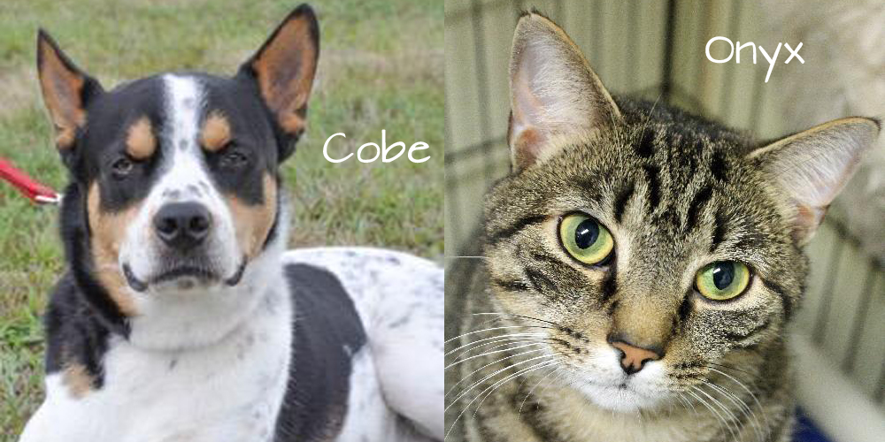 Cobe and Onyx are staying the Somerset Regional Animal Shelter while they wait for their forever homes.