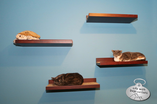 Repurposed shelves from Pottery Barn (I bought these and added carpet to each one) provide space for each cat to hang.