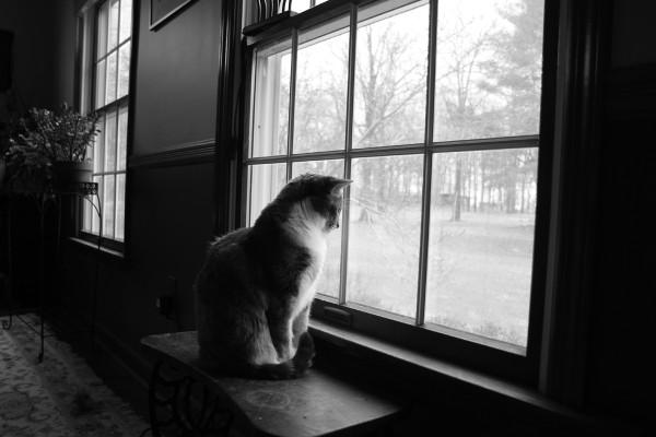 Cat in front of window