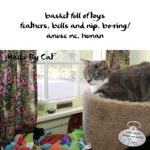 Haiku by Cat: basket full of toys / feathers, bells and nip. boring! / amuse me, human