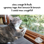 Haiku by Cat: Could
