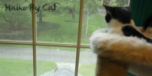Haiku by Cat: Performance