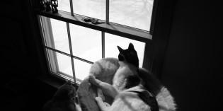 Photo: Snow wonder