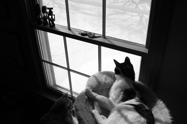 Two cats looking through a window at snow