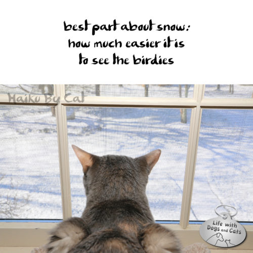 best part about snow: / how much easier it is / to see the birdies #HaikuByCat #HaikusDay #MicroPoetry