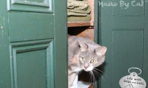 Haiku by Cat: Inspector