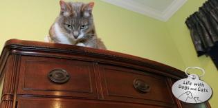 Haiku by Cat: Evil