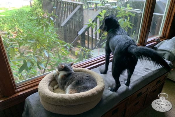 Only a few months ago, I wouldn't have imagined a moment where Dawn would be comfortable in her bed, while Halley jumped up next to her to look out the window. They have a mutual interest in bird watching. And squirrel watching. And chipmunk watching.