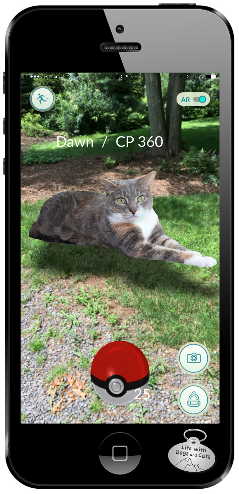 Cats are Pokemon Go Dawn