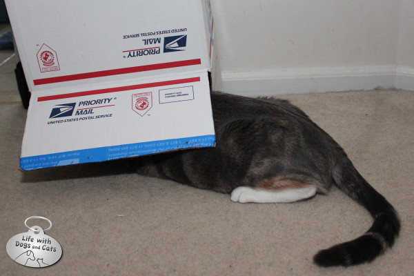 Reasons cats love boxes: They make very good hiding places.