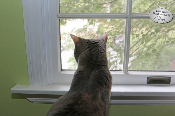 Dawn cat looking out window