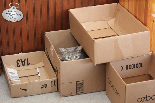 Reasons why cats love boxes: They make great forts.