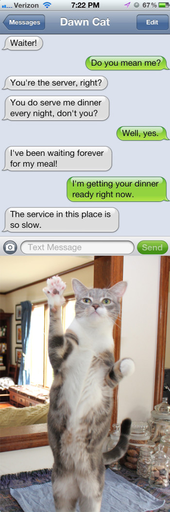 Text from cat: The service in this place is so slow.