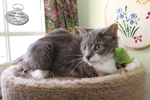 Dawn loves catnip, so I make sure she gets to play with a large, kickable catnip toy now and again.