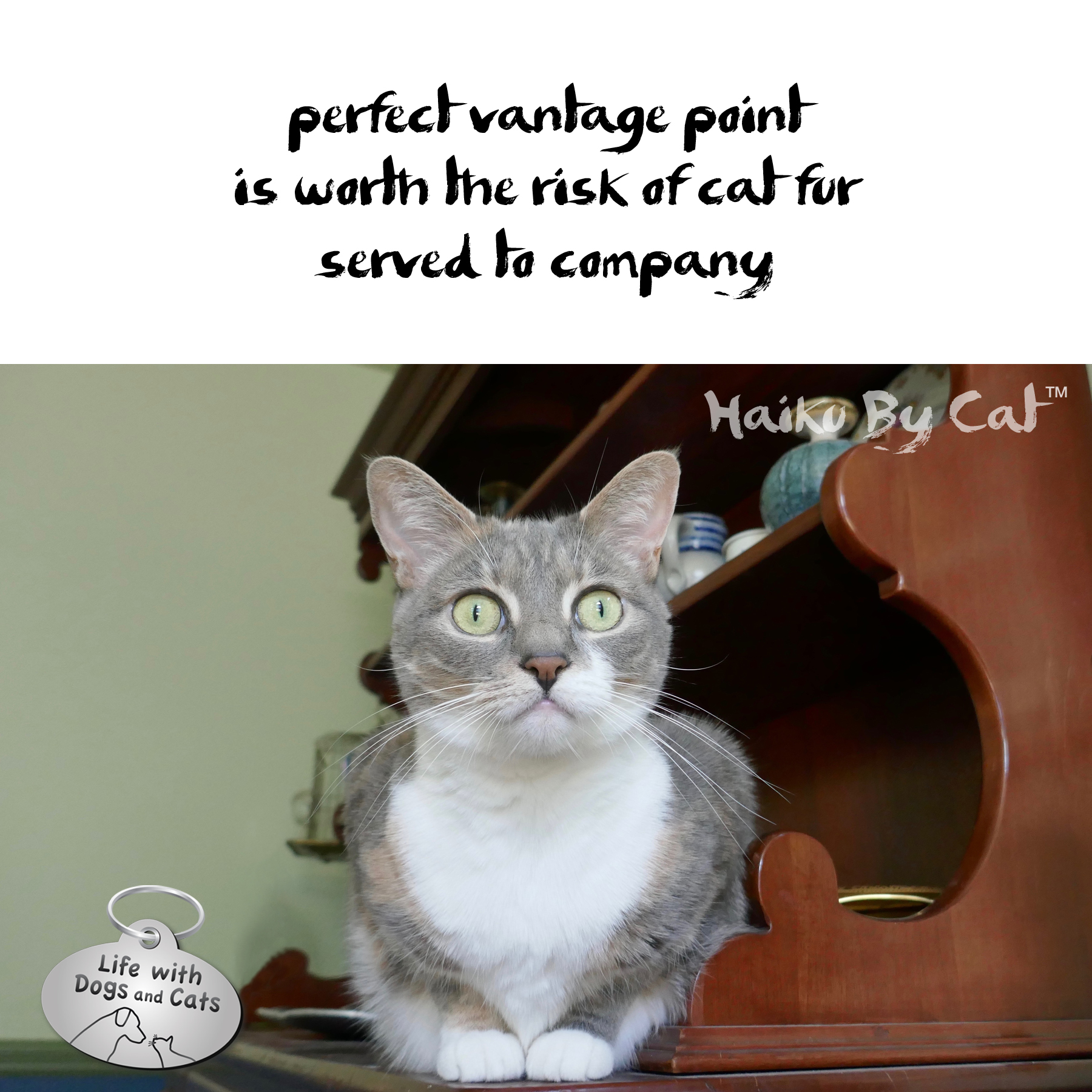 perfect vantage point / is worth the risk of cat fur / served to company #HaikuByCat #Haikusday #Micropoetry