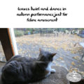 leaves twirl and dance in / autumn performance just for / feline amusement #HaikuByCat