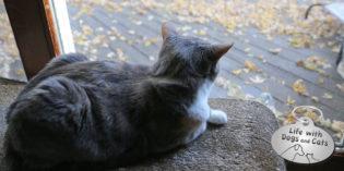 Haiku by Cat: Amusement