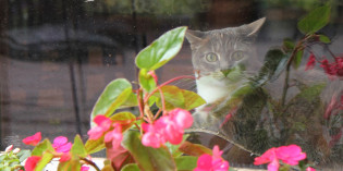 Haiku by Cat: Watching