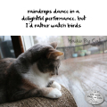 raindrops dance in a / delightful performance, but / I'd rather watch birds #HaikuByCat