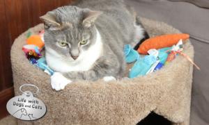 Haiku By Cat: Toys