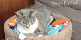 Haiku By Cat: Toys