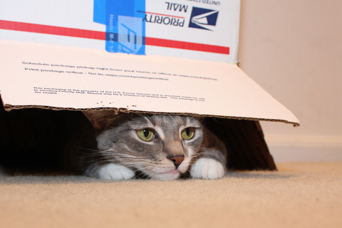 Cat In Cardboard Box On Stairs