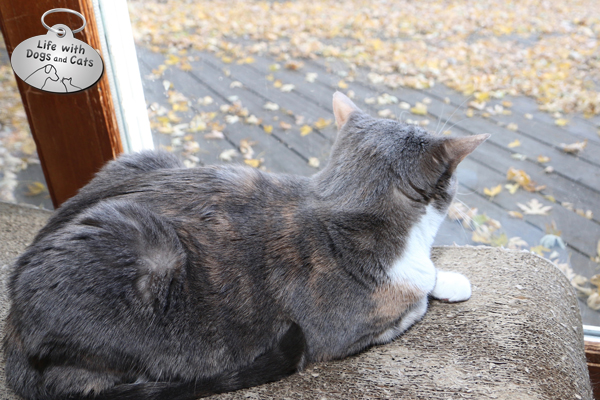 One of Dawn's favorite spots is on the large scratcher in the kitchen that overlooks the deck. Sometimes a chipmunk runs by. That's an awesome day.