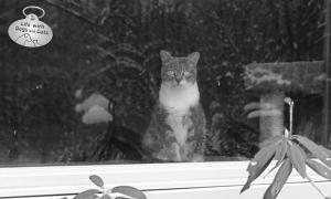 Window Watcher: My cat keeps her eyes on me