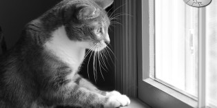Photo: Cat, entranced