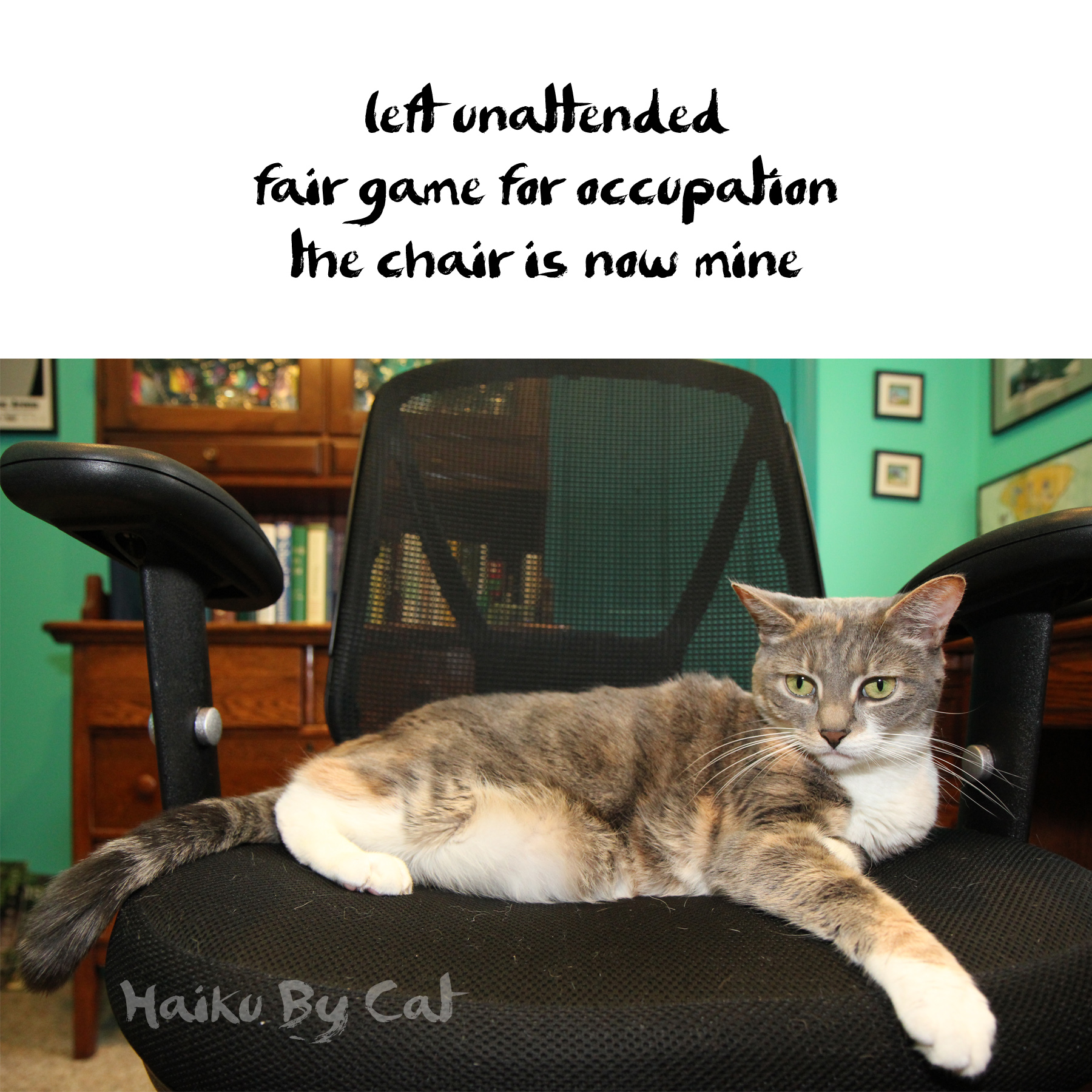 Haiku by cat: left unattended / fair game for occupation / this chair is now mine