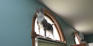 Her Highness, Dawn the Cat