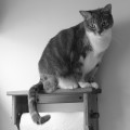 Dawn the cat sits on top of a paper towel holder
