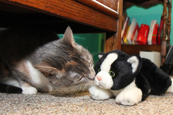 Dawn the cat gently sniffs a plush cat