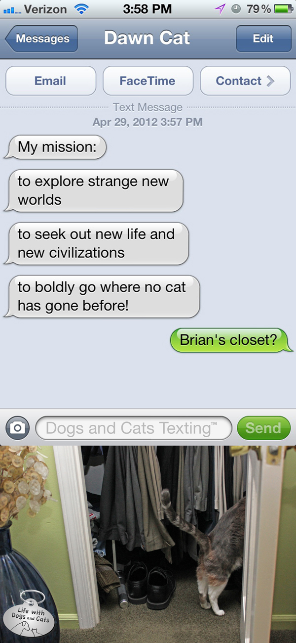 Text from Cat: Boldly go where no cat has gone before: in a closet