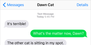 Text from Cat: An affront