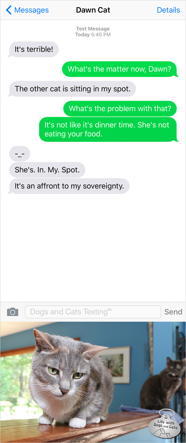 Text from Cat: She's in my spot. Text from me: So? Cat: It's an affront to my sovereignty