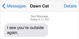 Text from Cat: You took your lap