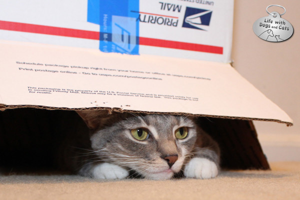 Reasons why cats love boxes:  You can be extra sneaky.