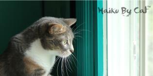 Haiku by Cat: Untasted