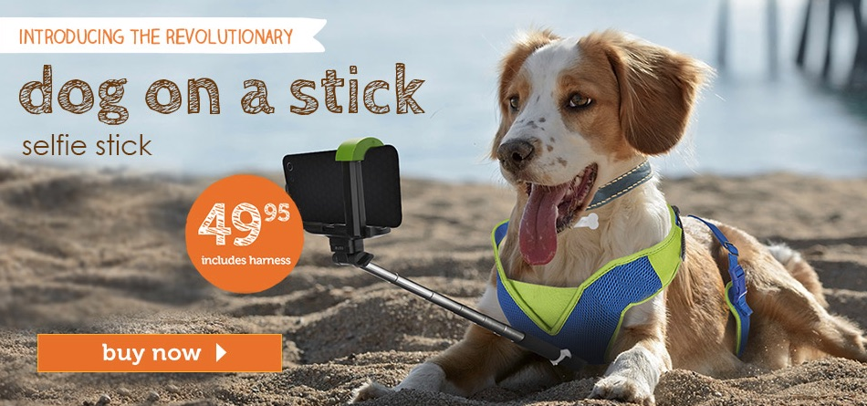 Dog on a stick selfie stick